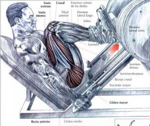prensa de piernas